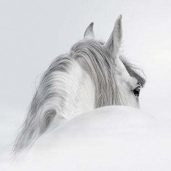 Tablouri pe sticla White Horse