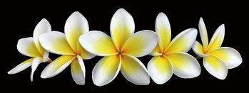 Tablouri pe sticla White Orchid