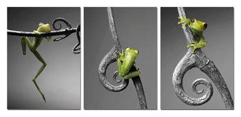 New Model - Frog Tablou
