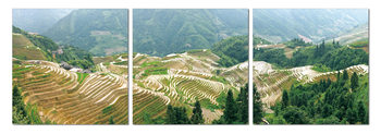 Terraced plantations Tablou