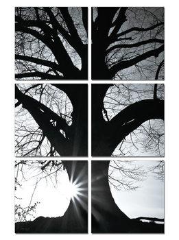 Tree - Silhouette (B&W) Tablou