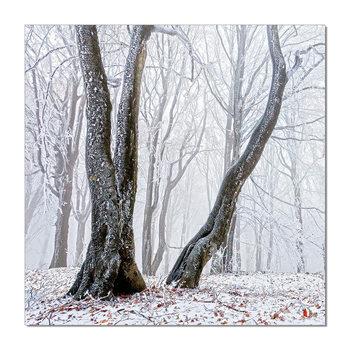 Trees Tablou