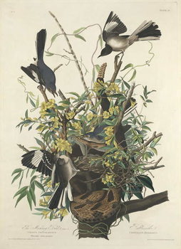 The Mocking Bird, 1827 Festmény reprodukció