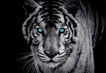 Ταπετσαρία τοιχογραφία  Tiger Animal