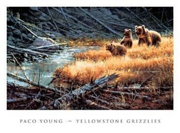 Yellowstone Grizzlies Reprodukcija umjetnosti