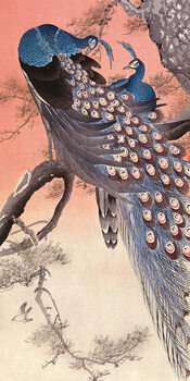 Tableau sur Toile Ohara Koson - Two Peacocks on Tree Branch