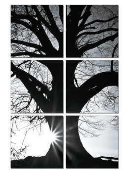 Tree - Silhouette (B&W) Modern tavla