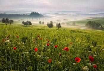 Ταπετσαρία τοιχογραφία  Tuscan Spring