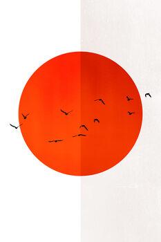 Ilustracija 13 Seagulls In The Sun