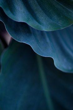 Umjetnička fotografija Blades from blue plant