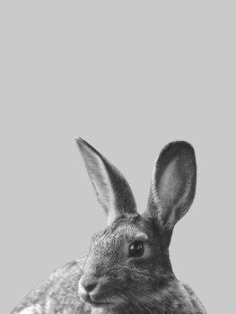 Ilustracija Grey rabbit
