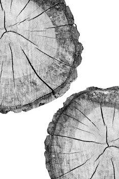 Umjetnička fotografija Tree
