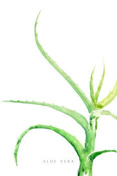 Ilustracija Watercolor aloe vera illustration