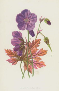 Meadow Crane's Bill Reprodukcija umjetnosti