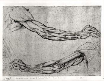 Study of Arms Reprodukcija umjetnosti