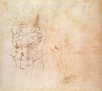 Torso Study Reprodukcija umjetnosti