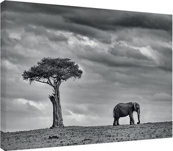 Vászonkép Mario Moreno - Land of Giants
