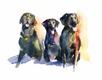 Vászonkép Three Black Labs, 2015,
