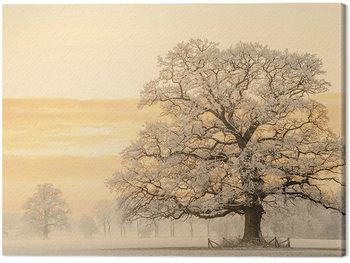 Vászonkép Lars Van De Goor - Winter Light