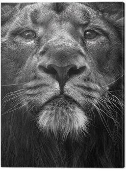 Vászonkép Marina Cano - The King