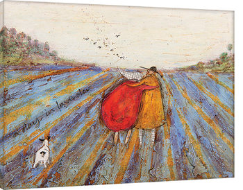 Vászonkép Sam Toft - A Day in Lavender