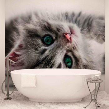 Chat Chaton Poster Mural