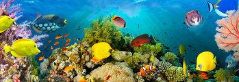 Sea Corals  Poster Mural