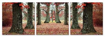 Wandbilder  Autumn alley