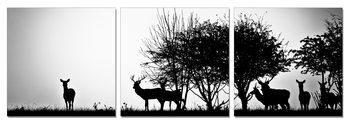 Wandbilder Forest Life - Silhouettes