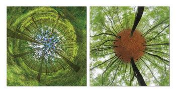 Wandbilder Looking into the tree crowns
