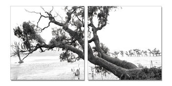 Wandbilder Praying Tree (B&W)