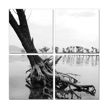 Wandbilder Roots in River