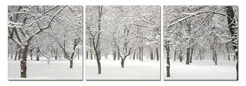 Wandbilder Snowy winter sets