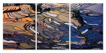 Wandbilder  Sunrise over plantations