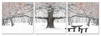 Wandbilder Winter Park