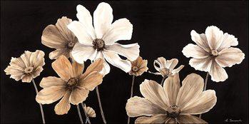 White Cosmos Festmény reprodukció