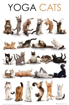 Yoga cats - плакат (poster)