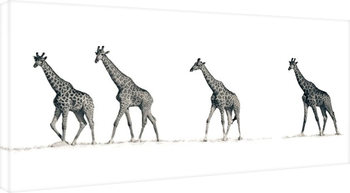 Платно Mario Moreno - The Giraffes