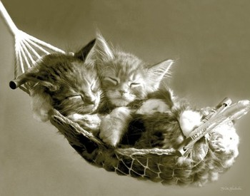 KEITH KIMBERLIN - kittens in a hammock плакат