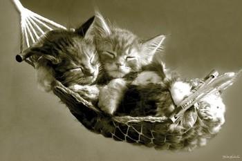 Keith Kimberlin - kittens in a hammock - плакат