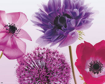 Purple summer - плакат