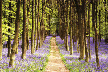 Woodland - path - плакат