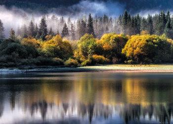 Forêt - automne Affiche