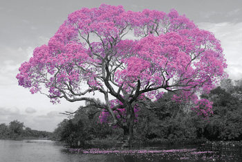 Tree - Pink Blossom Affiche