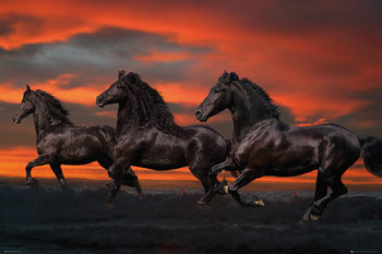 Bob Langrish - Fantasy horses - плакат (poster)