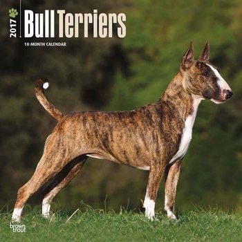Calendar 2017 Bull terrier