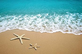 Cuadro en vidrio Sea - Stars in the Sand