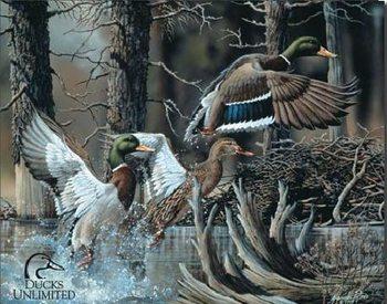 DU - beaver pond Metalen Wandplaat