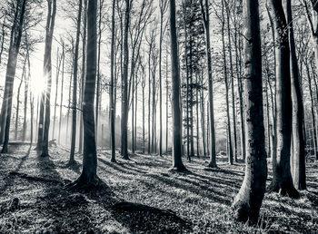 Bos - black and white Fotobehang