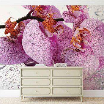 Flowers Orchids Drops Fotobehang
